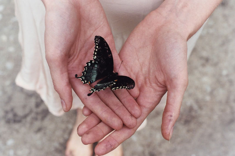 ButterflyOpenHands